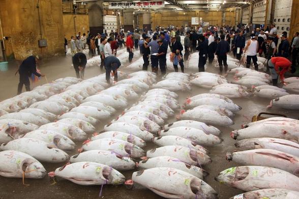 tsukiji-fish-market-today-tokyo